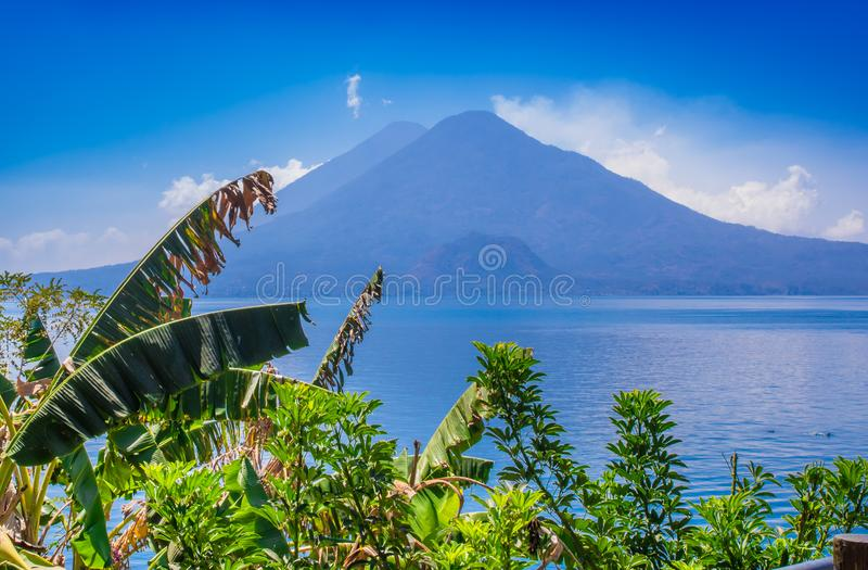 Close up of colorful yellow plants tree with a gorgeus view of Atitlan Lake, is the deepest lake in all of Central stock image