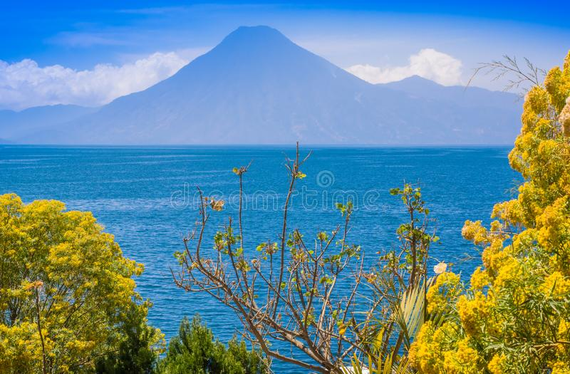 Close up of colorful yellow plants tree with a gorgeus view of Atitlan Lake, is the deepest lake in all of Central stock images