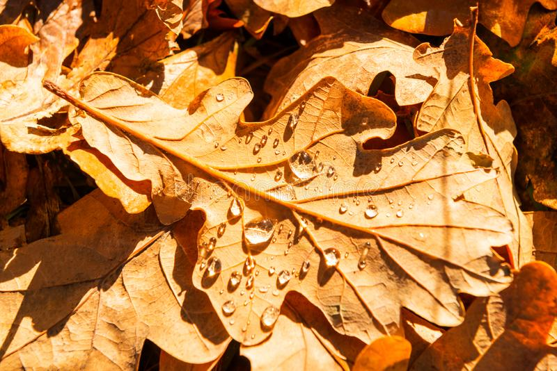 Close up of colourful autumn yellow leaves. English Park. Top vi royalty free stock image