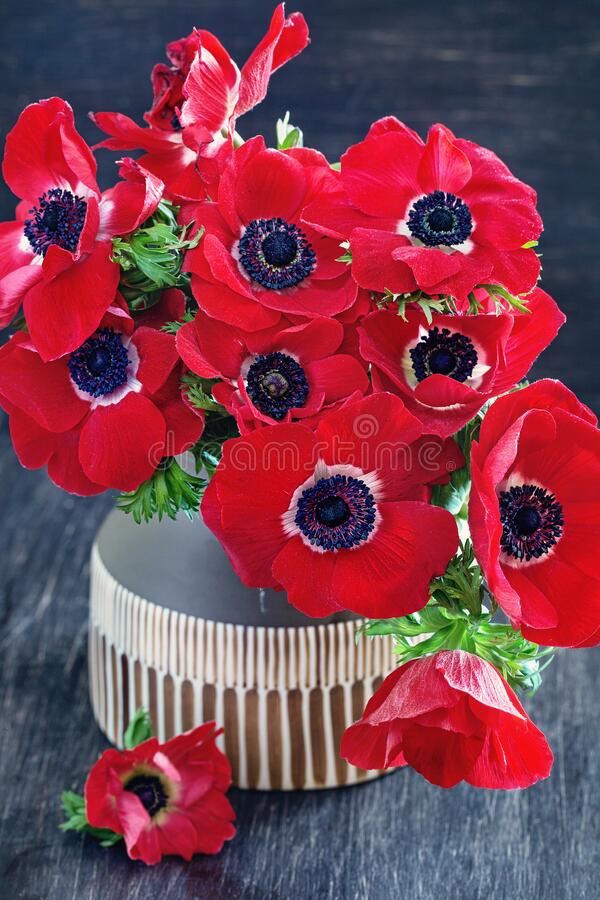 Close-up composition with a red anemones flowers. stock photos