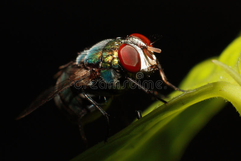 Close up compound eye of fly on black background stock photo