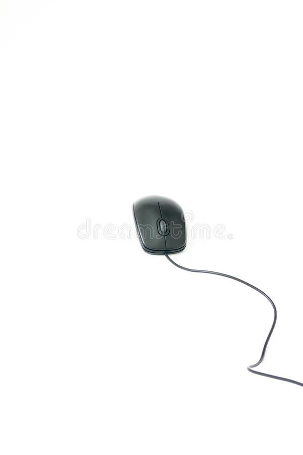 Computer mouse on white background royalty free stock image