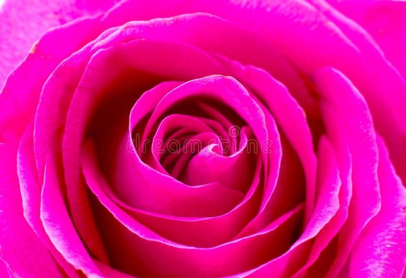 Close up cor-de-rosa bonito fotografia de stock royalty free