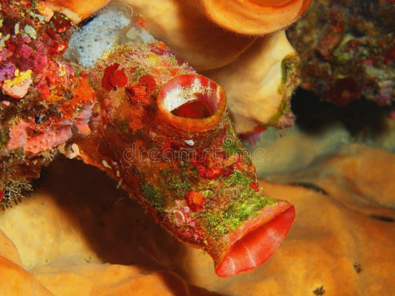 Close-up coral macio Indonésia Sulawesi fotos de stock