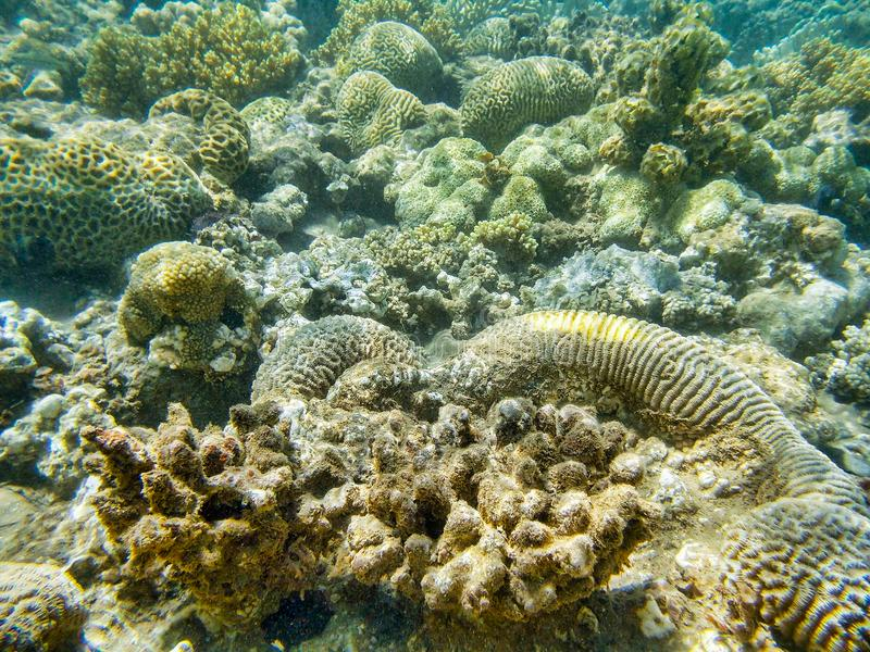 Coral reef in red sea stock photography
