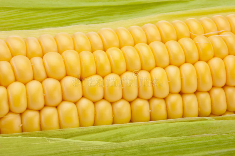 Close-up Corn on the cob with green leaves