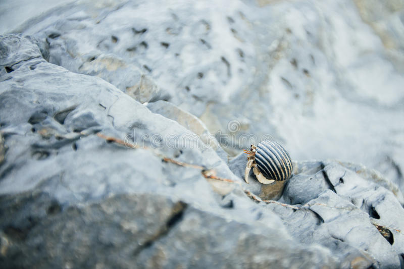 Close-up of a crab sitting on the stone royalty free stock image