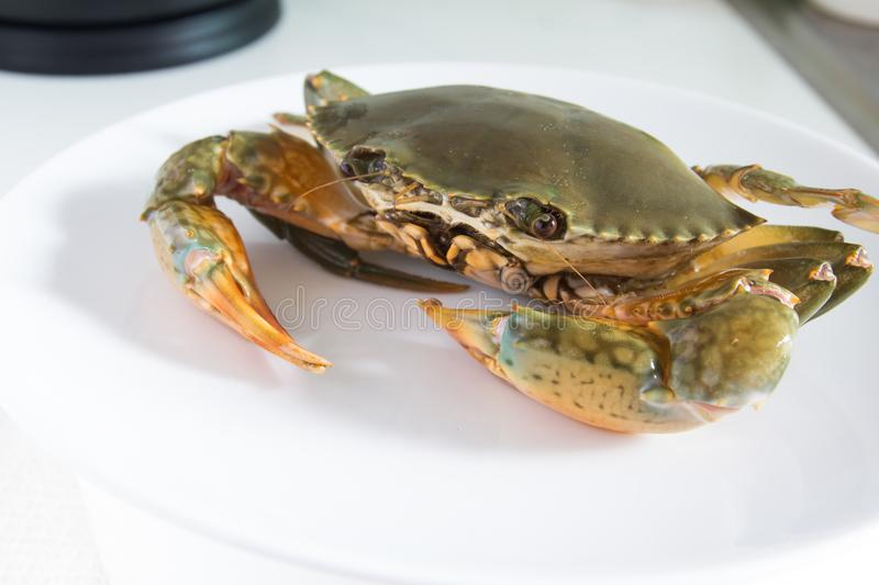 Crab on plate stock image