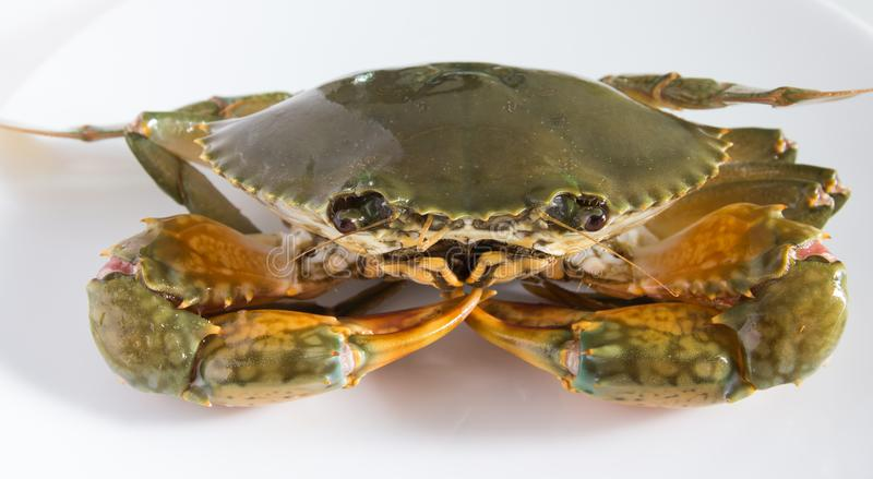 Crab on plate royalty free stock image