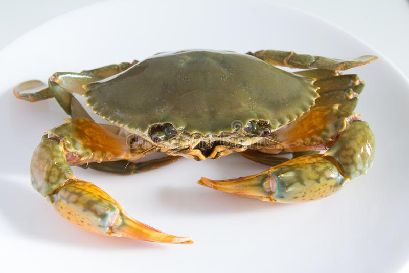Crab on plate stock photos