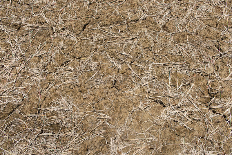Close up of the cracked ground, dry soil texture stock photo