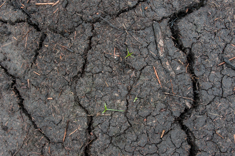 Close up of the cracked ground stock photos