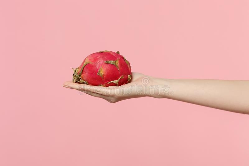 Close up cropped photo of female hold in hand fresh ripe pitahaya, dragon fruit isolated on pink pastel wall background. Copy space advertising mock up. People royalty free stock photos