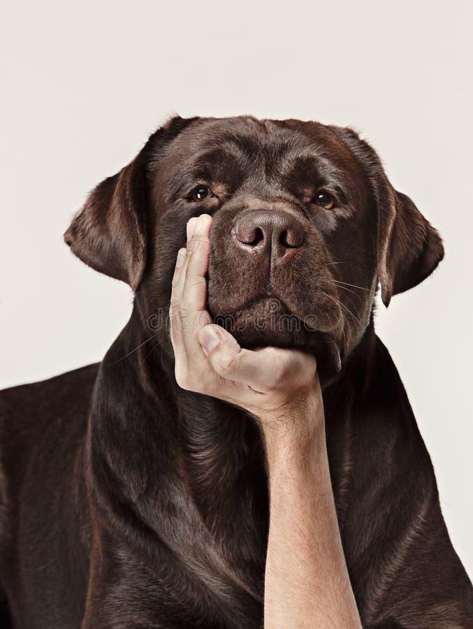 Close-up crying dog face stock photos