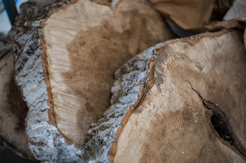 Close up of cut tree trunk pieces macro royalty free stock images