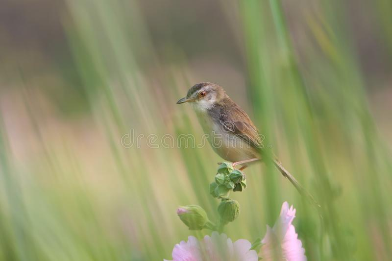 Close up cute bird with flowers in nature stock images