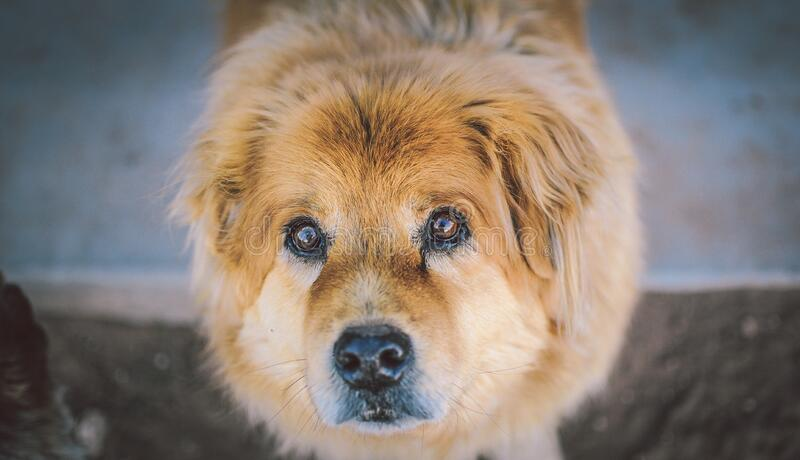 Close Up Of Cute Dog Looking At The Camera Free Public Domain Cc0 Image