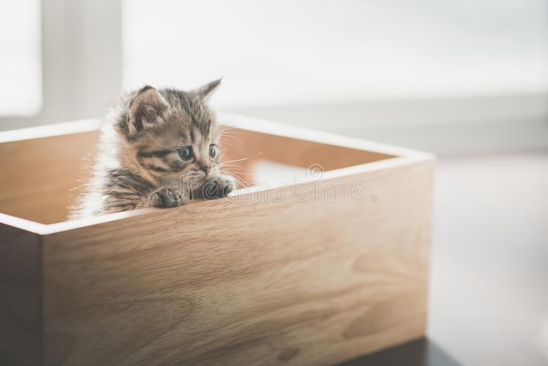 Close up cute kitten playig in a wooden box royalty free stock images