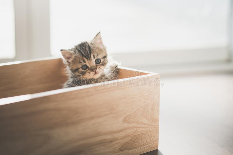 Close up cute kitten playig in a wooden box royalty free stock photo