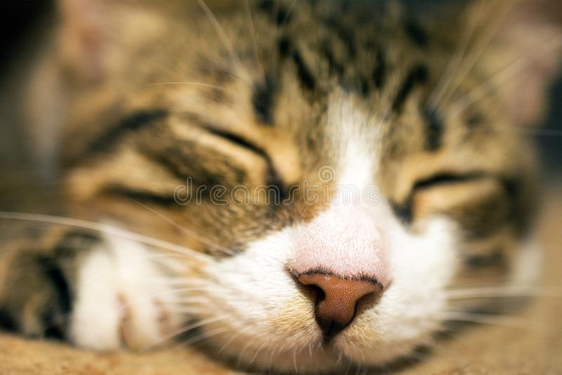 Cute sleeping cat. Close up of cute sleeping cat, deed, selective , blurred background stock photos