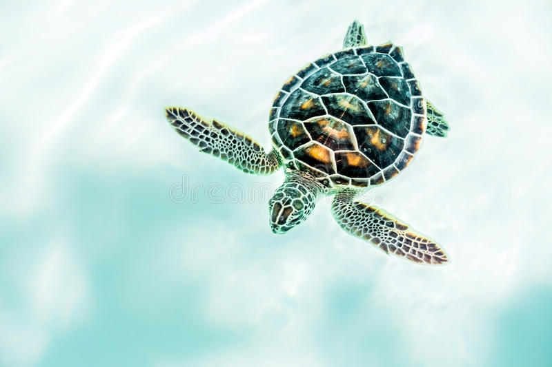 close up of cute turtle stock image image of mexican 69583005