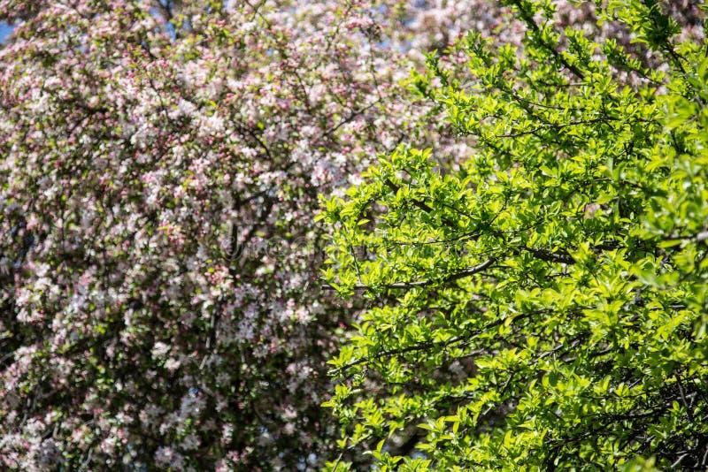 Close up da árvore fotos de stock royalty free