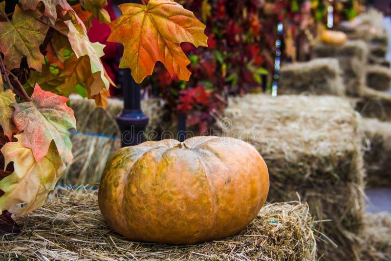 Close up da abóbora em monte de feno Aleia da rua decorada para o mercado do outono com folhas de bordo Dia da ação de graças e c imagem de stock royalty free