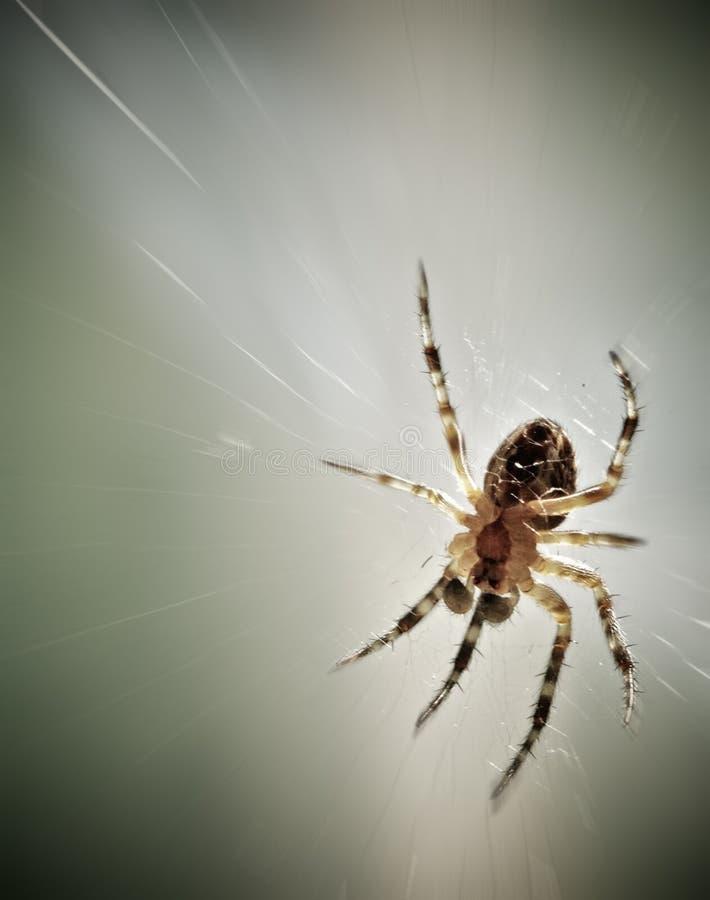 Close-up da aranha imagens de stock