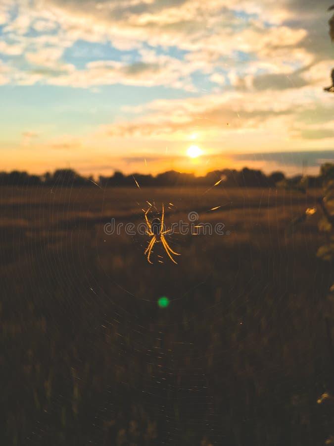 Close-up da aranha em uma Web nos raios do sol de ajuste foto de stock
