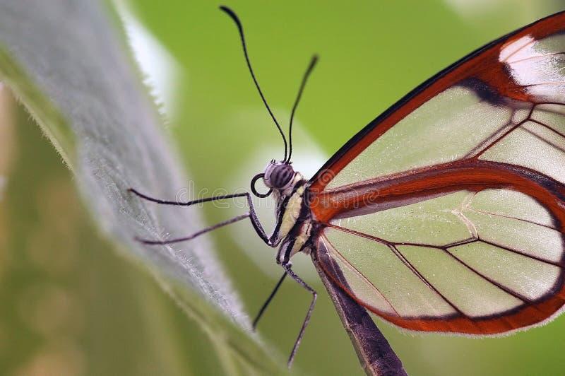 Close up da borboleta imagem de stock royalty free