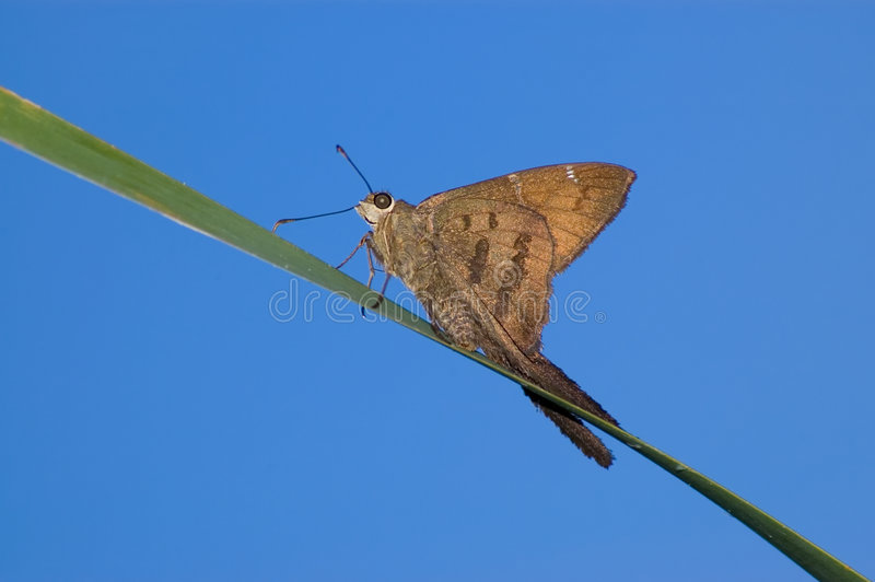 Close-up da borboleta. imagem de stock