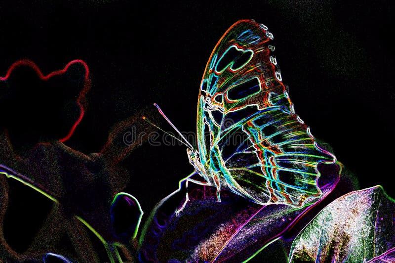 Close up da borboleta da malaquite com bordas de incandescência fotografia de stock