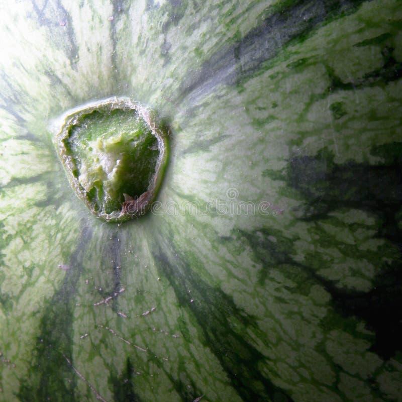 Close-up da casca da melancia fotografia de stock royalty free