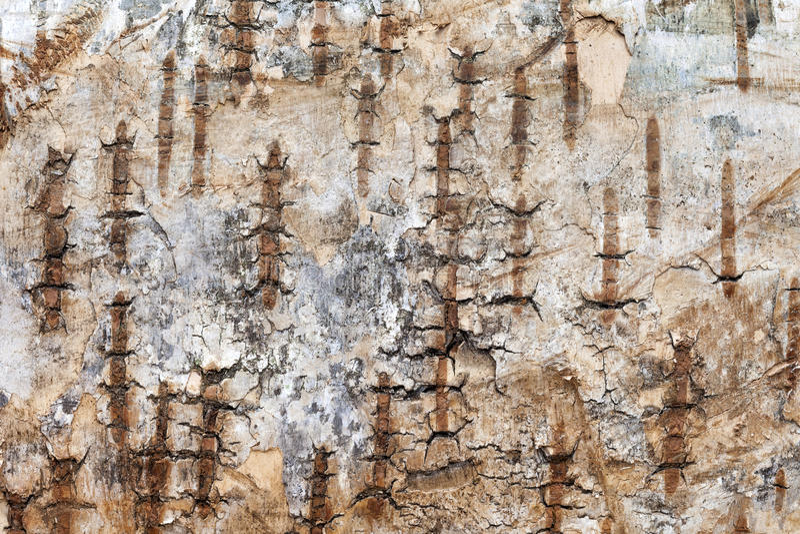 Close up da casca de árvore imagem de stock