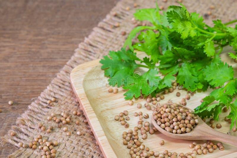 Close-up da cor marrom secada das sementes de coentro em uma colher, em um prato de madeira e em um fundo da cor verde da folha d fotografia de stock