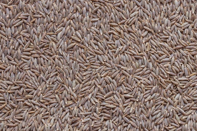 Close up da especiaria inteira do cominhos ou do Jira, foco seletivo imagem de stock