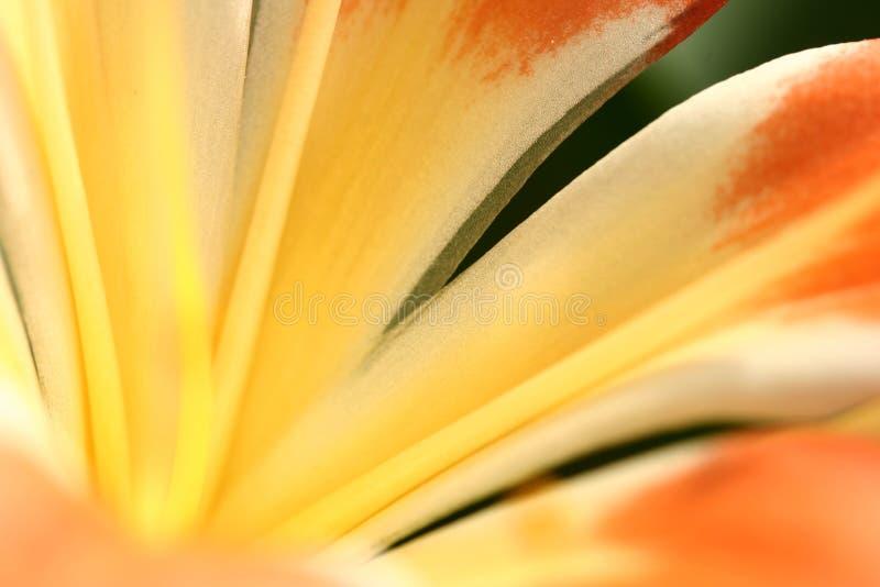 Close up da flor foto de stock