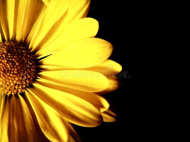 Close-up da flor imagem de stock