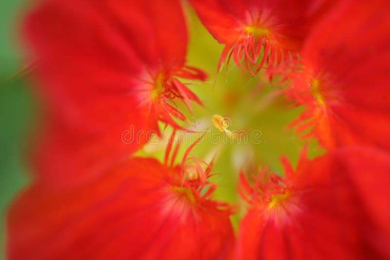 Close up da flor imagens de stock
