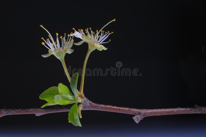 Close-up da flor branca foto de stock