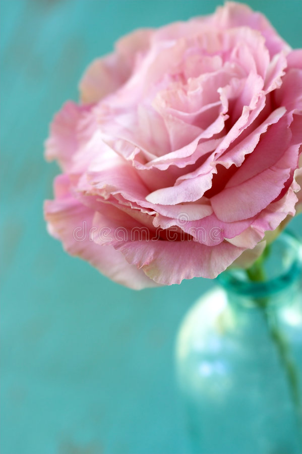 Close up da flor de Lisianthus imagem de stock