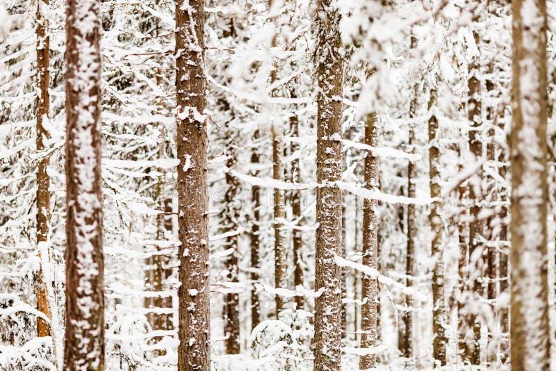 Close up da floresta nevado imagens de stock royalty free