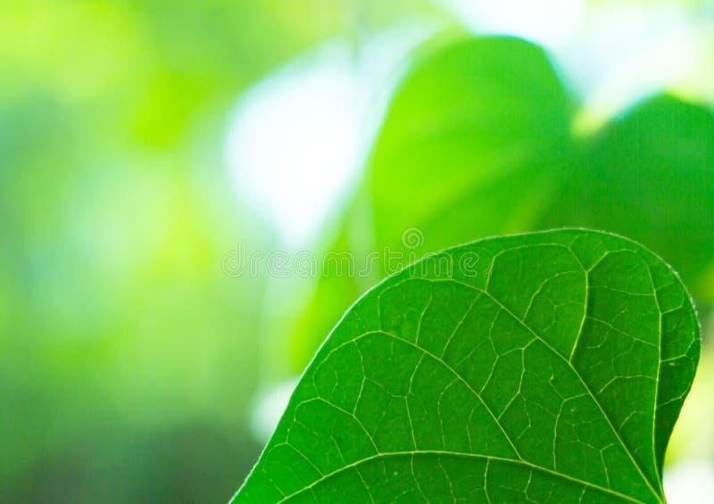 Close-up da folha da árvore, a folha na natureza imagens de stock royalty free