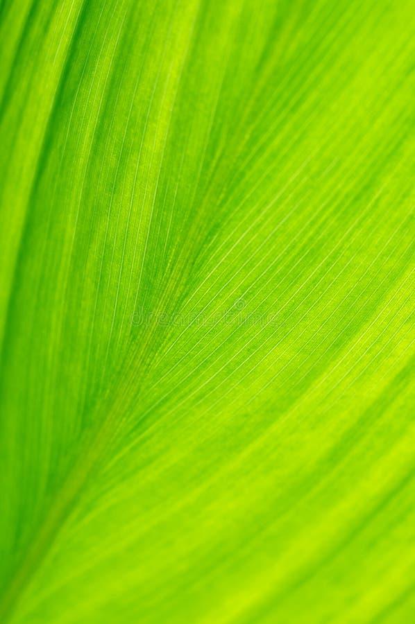 Close-up da folha imagem de stock