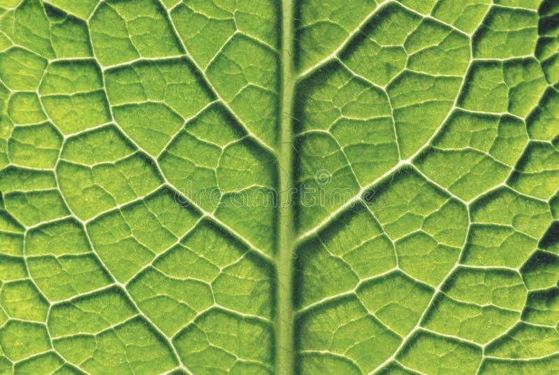 Close-up da folha foto de stock