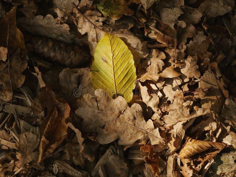 Close-up da folha do outono fotografia de stock
