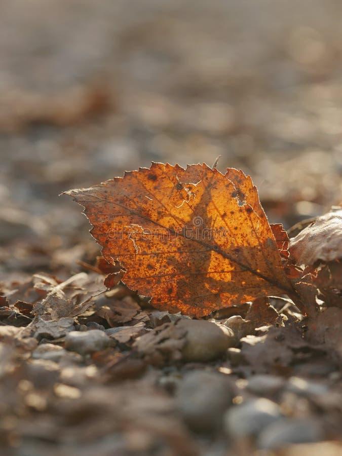 Close-up da folha do outono fotografia de stock royalty free