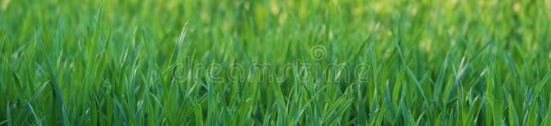 Close up da grama imagem de stock