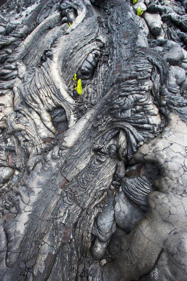 Close-up da lava e uma planta fotos de stock royalty free
