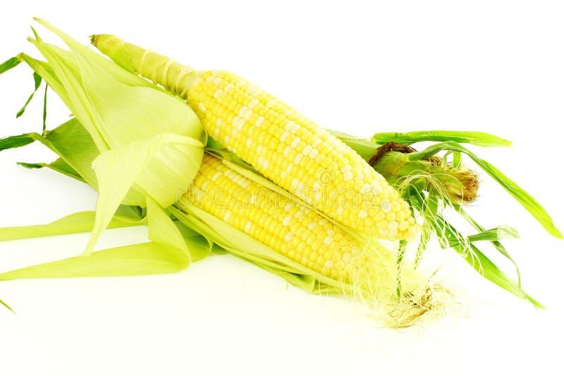 Close up da orelha de milho no fundo branco puro imagem de stock royalty free
